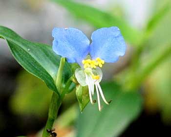神明社花だより8月の花
